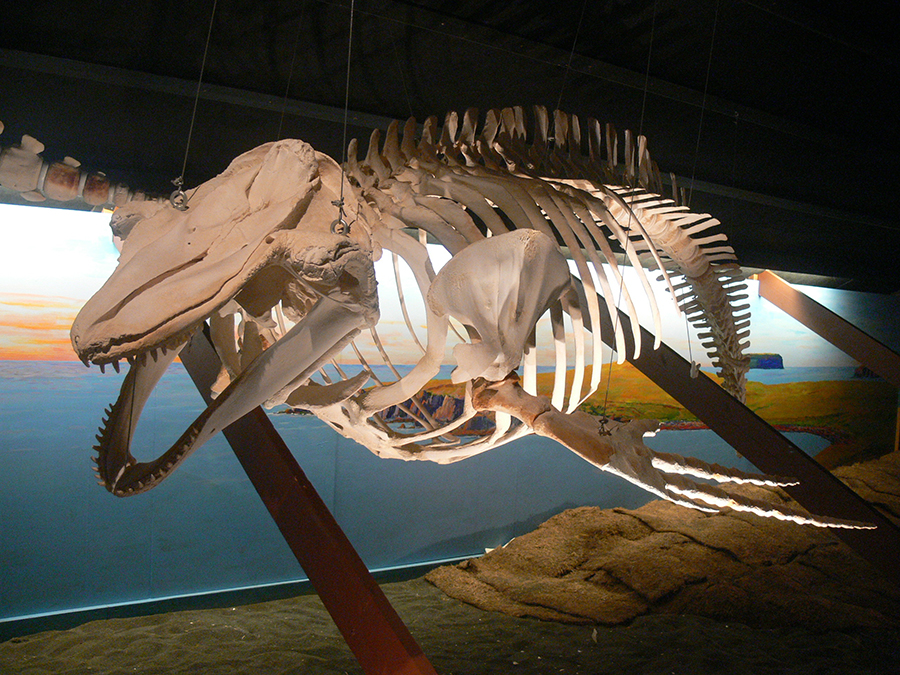 Museo de las ballenas. Foto: Wolfgang Sauber