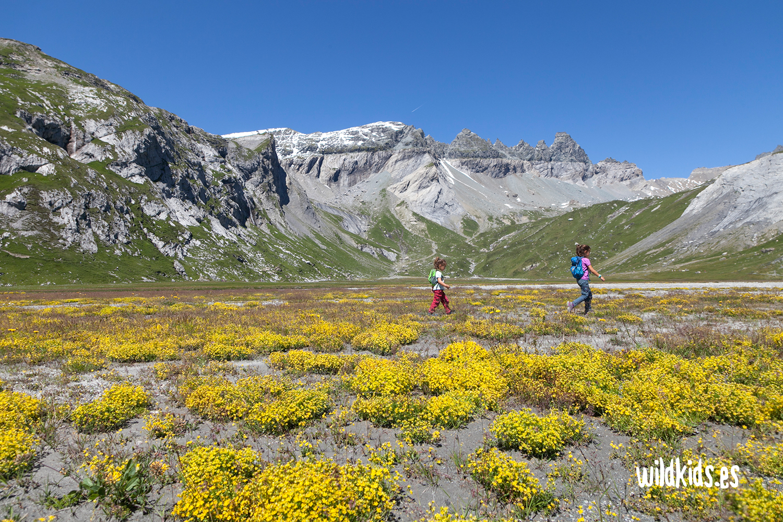 Pastos alpinos bajo el Swiss Tectonic Arena Sardona